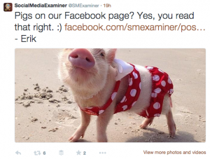 Pigs on Facebook